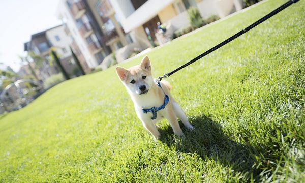 Dog Days at 72andSunny – LA Times