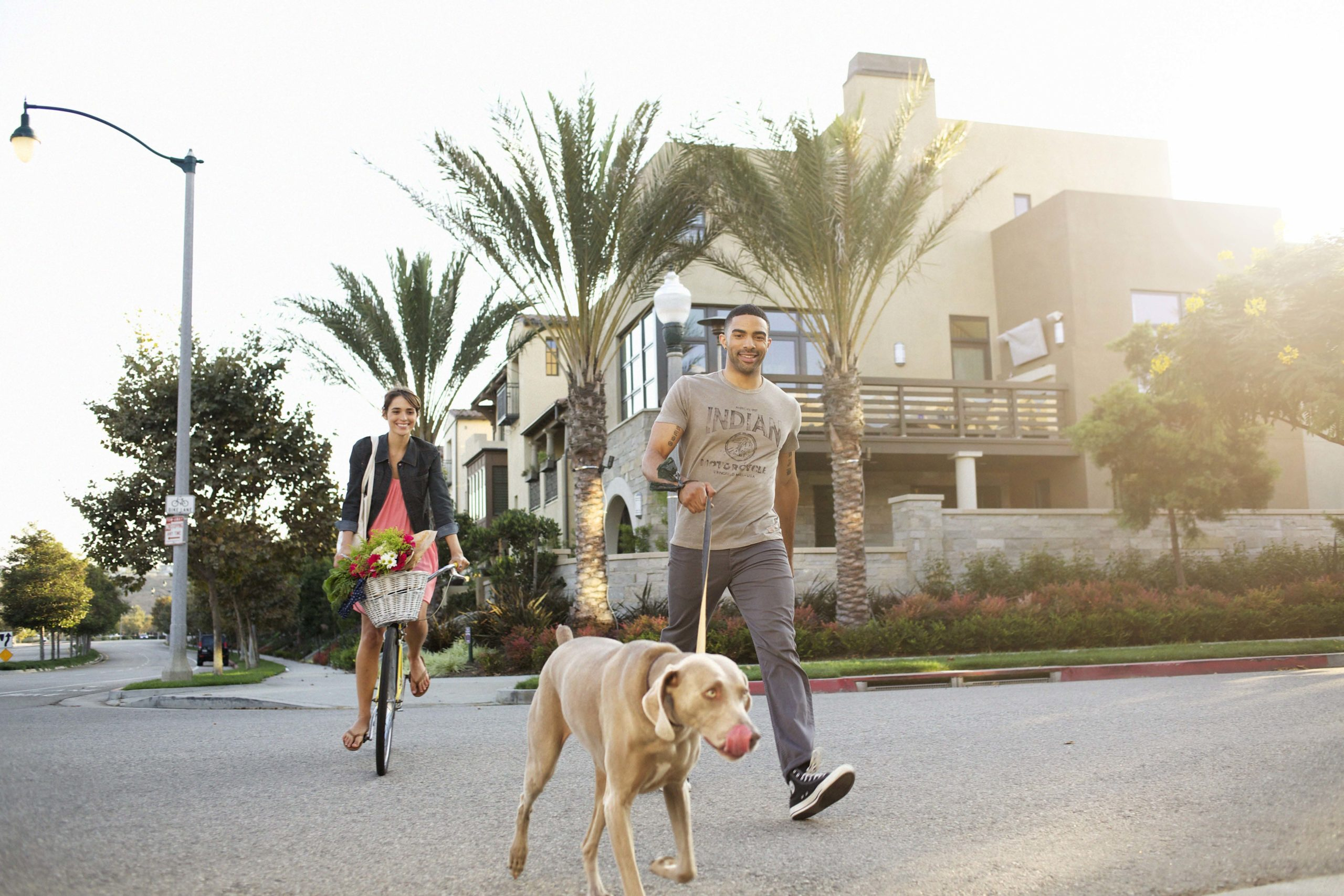 Playa Vista bikes and dog walking
